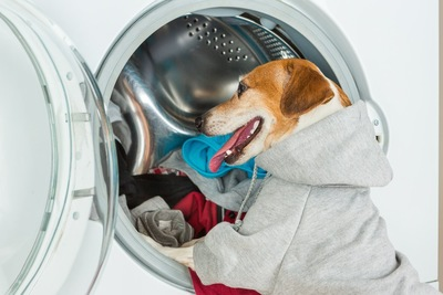 洗濯機に洋服を入れている犬