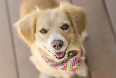 笑顔でこちらを見上げる茶色い犬