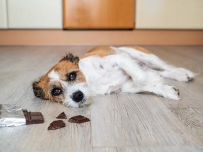 横になる犬とチョコレート