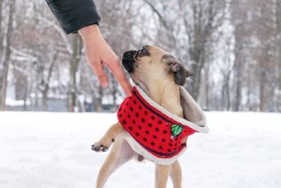触ろうとする手を避けようとする犬