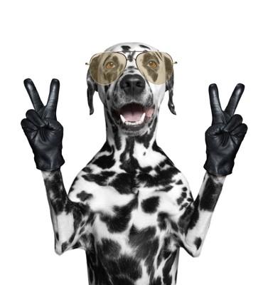 ピースサインをしている犬