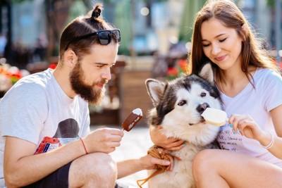 アイスを食べる犬
