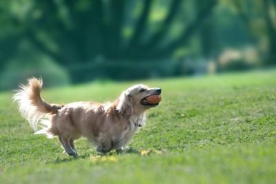 犬が駆けている写真