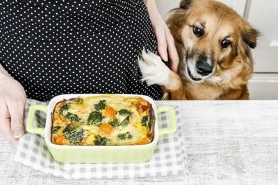 料理を見つめる犬