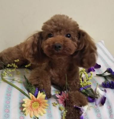 お花で遊ぶ愛犬