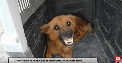 シェルターの中で牙をむく犬