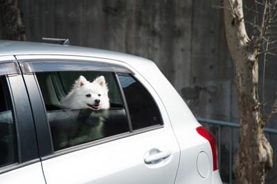 車で留守番する犬