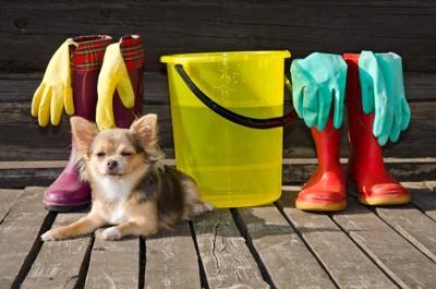 バケツや長靴の前で座っている犬