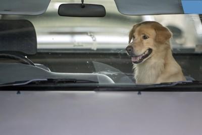車内に座っている犬