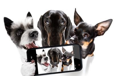 3匹の犬とスマホカメラ