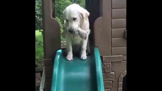 オモチャ咥えながら滑り台の上に立つ犬