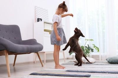 子供の持ってるおやつを欲しがる犬