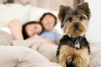眠るカップルと犬