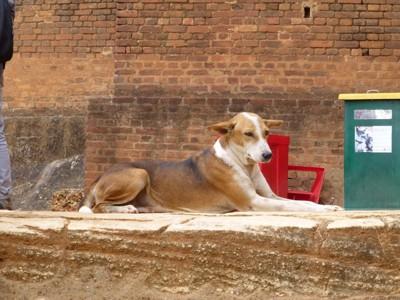 座る野良犬