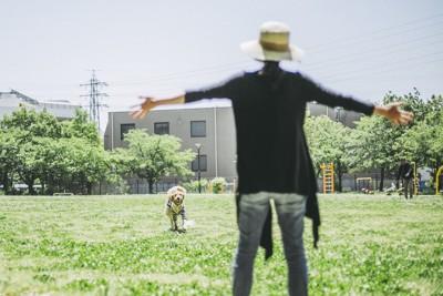 手を広げて待つ飼い主と駆け寄る犬