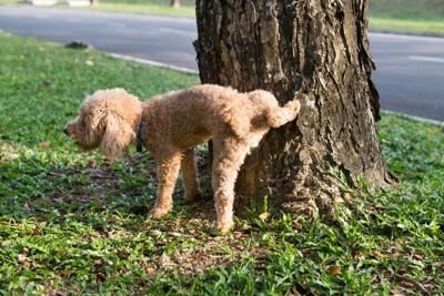 木にマーキングをする犬