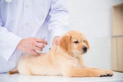 注射を打つ子犬