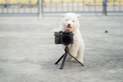 カメラと子犬