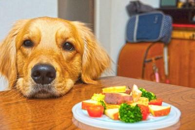 食事が乗っているテーブルに顔を乗せる犬