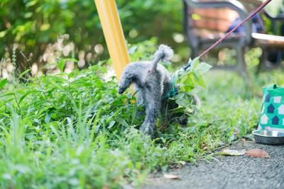 草むらでトイレをする犬