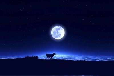 満月と走る犬のシルエット