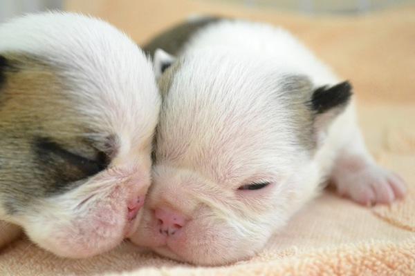 寄り添う赤ちゃん犬 2頭