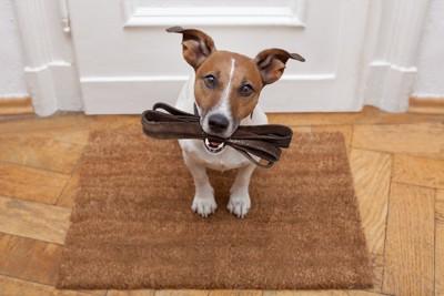 リードをくわえて座る犬