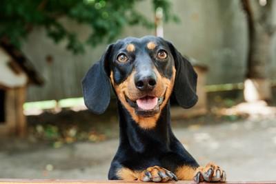元気よく見つめる犬