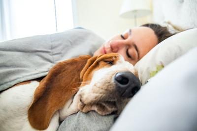 飼い主と一緒に寝るバセット・ハウンド
