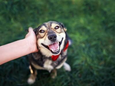 飼い主に撫でられて嬉しそうに見つめる犬