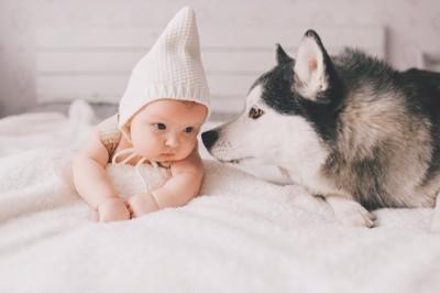 赤ちゃんのにおいを嗅ぐ犬