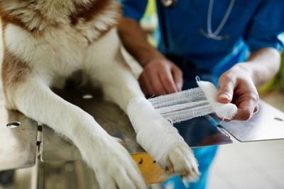 包帯を巻かれている犬の足