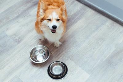 空のフードボウル そばに笑顔の犬 コーギー