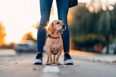 足の間に犬