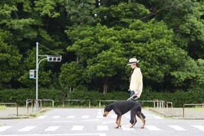 横断歩道を歩く女性と犬