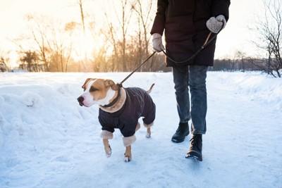 雪道を散歩する犬