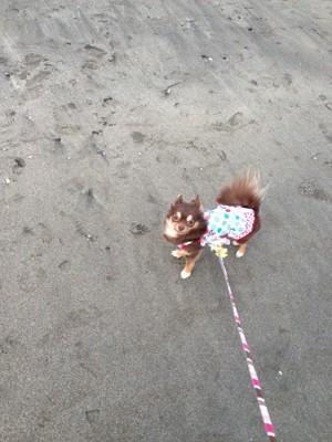 砂浜を歩く犬