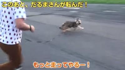 走り回るワンちゃん