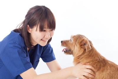 青い服の女性と犬