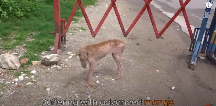 がりがりの状態の犬