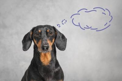 何か考えている犬