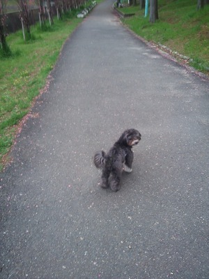 道路を歩く犬
