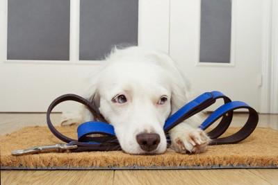 散歩を待つ犬