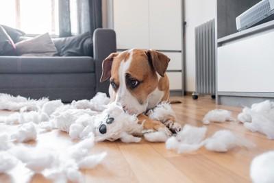 散らかる綿と犬