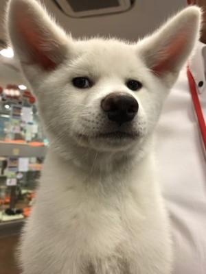 愛犬の変顔写真21枚目