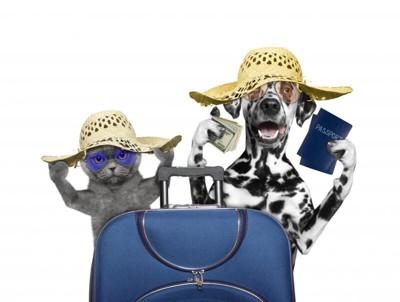 ペットの海外旅行