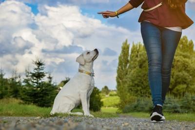 飼い主の指示を待つ犬