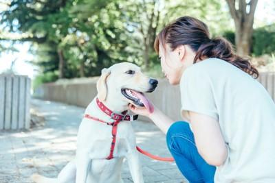 赤いリードの犬と女性