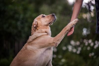 手に触る犬