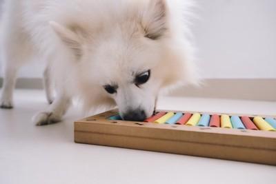 トリーツ探しゲームをする犬